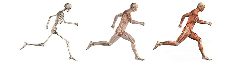 - Physicaltherapyscience.com
